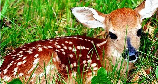 انشا در مورد دیدن یک شکارچی از دریچە چشم یک آهو