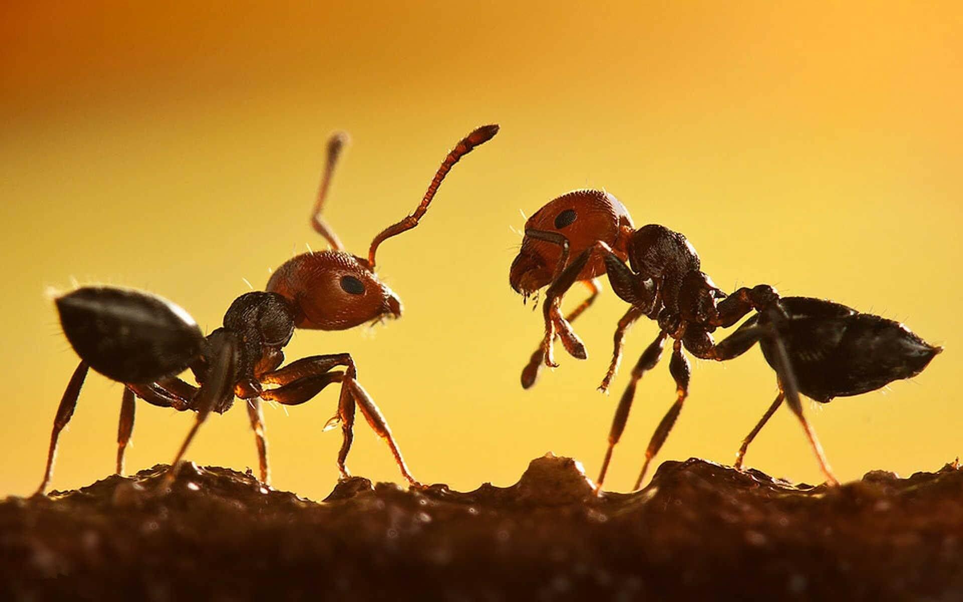 انشا دوم در مورد دیدن مورچه ای که باری را می کشد