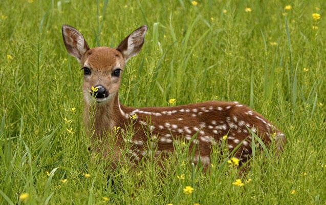 انشا سوم در مورد دیدن یک شکارچی از دریچه چشم یک آهو