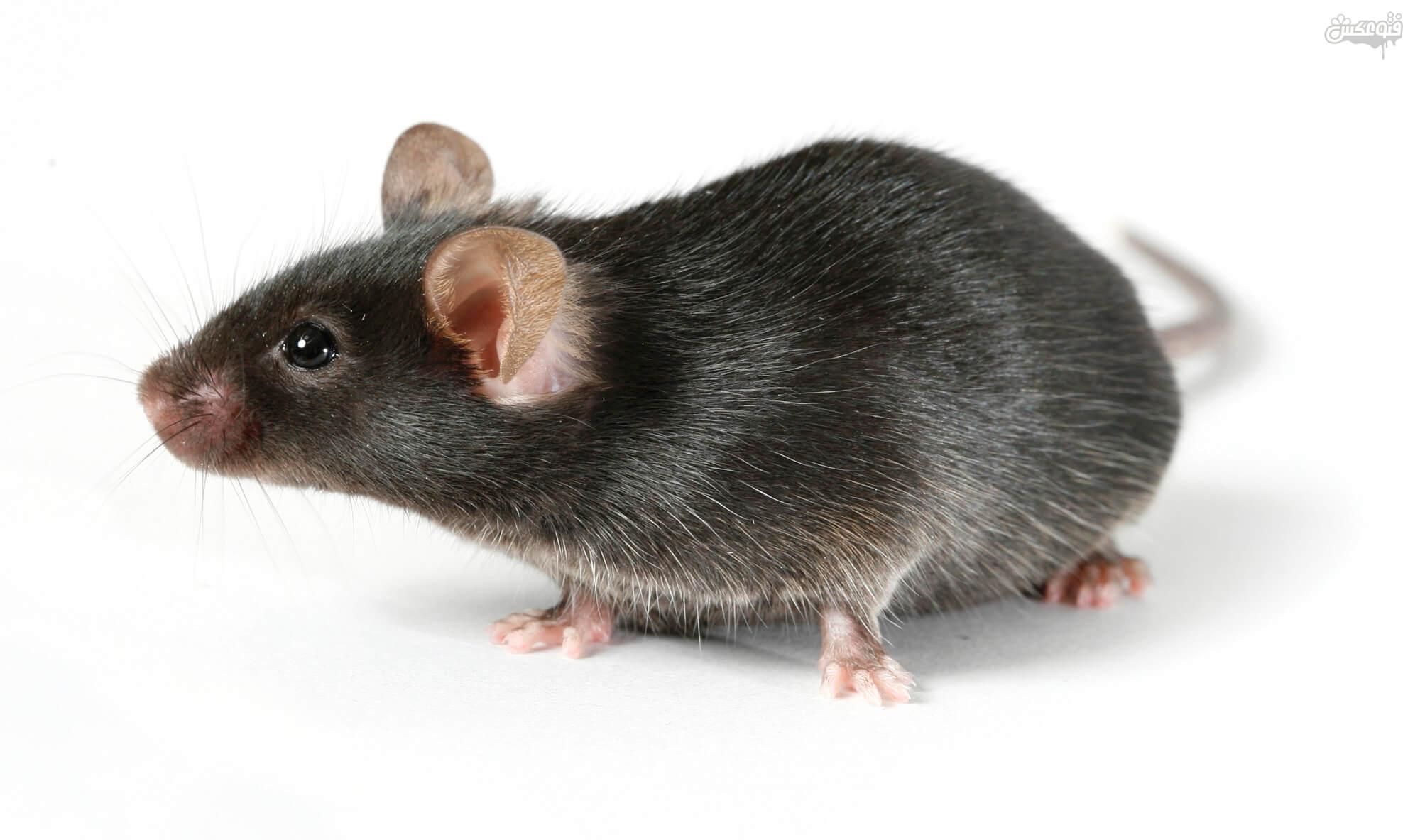 انشا دوم در مورد صحنه ورود یک موش به خانه