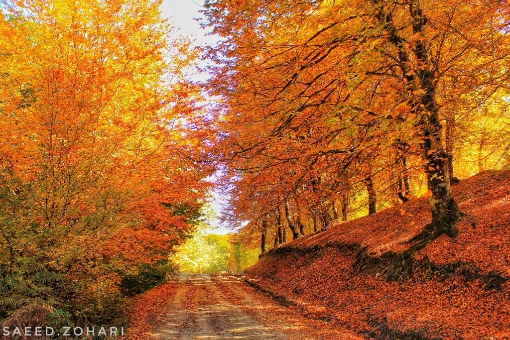 انشا درباره پاییز