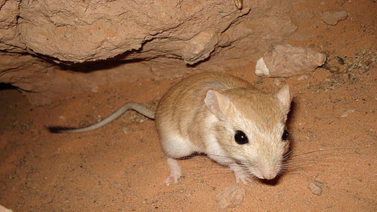 انشا سوم در مورد صحنه ورود یک موش به خانه